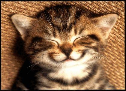 Plaatjes katten