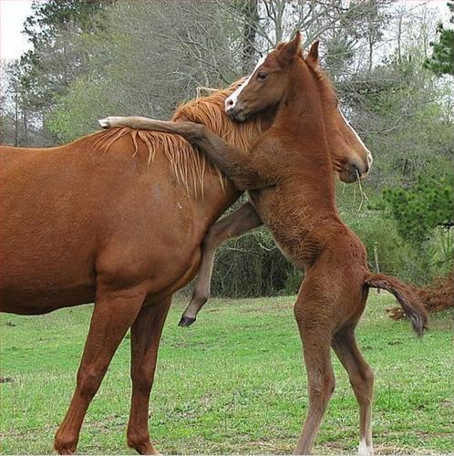moeder en veulen knuffel