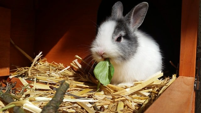 la cage pour son lapin nain