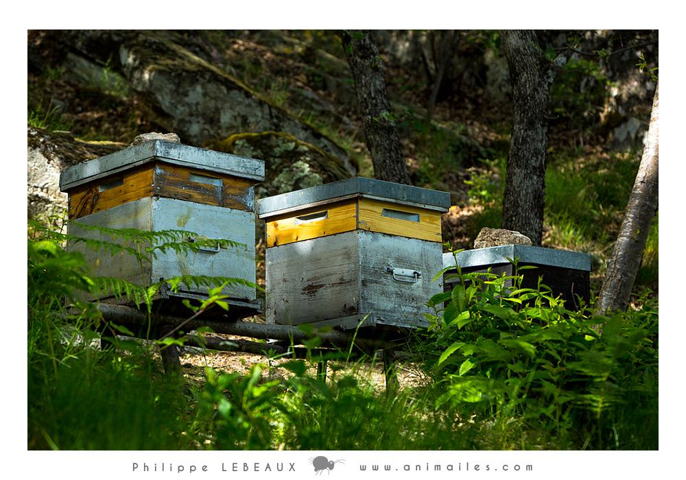 l'apiculture naturelle en ruche Warré