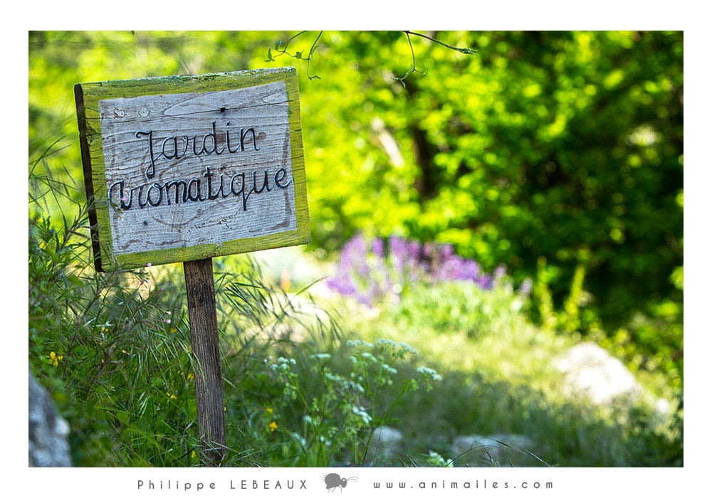 Le jardin aromatique de Graine de Fourmis
