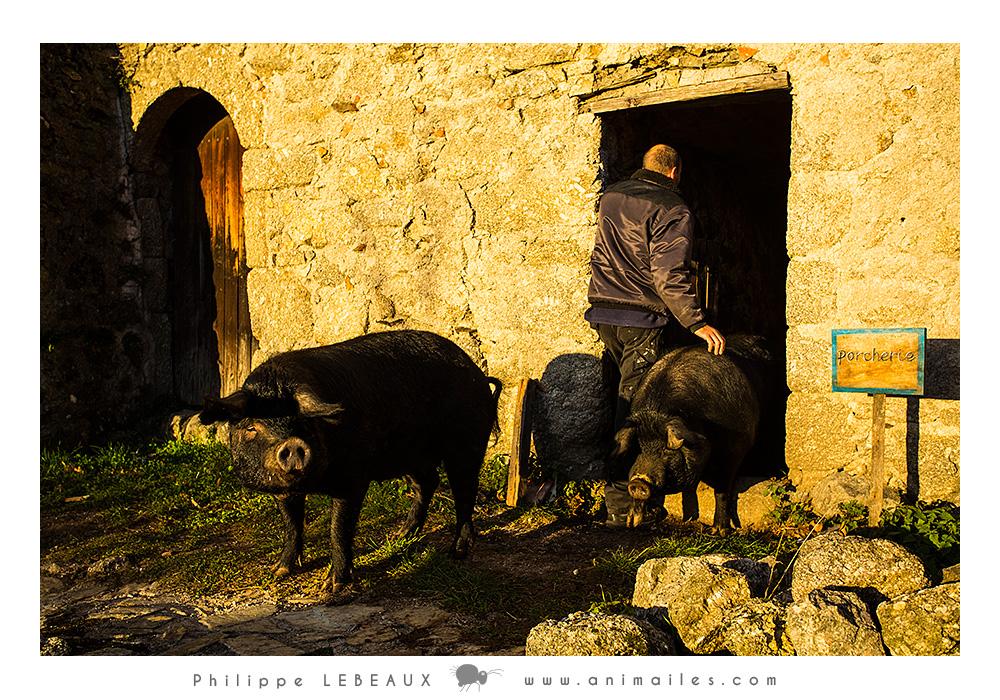 Telma et Louise sortant de la porcherie