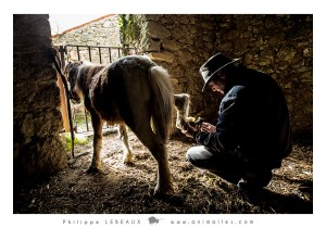 Laurent inspecte les sabots du poney