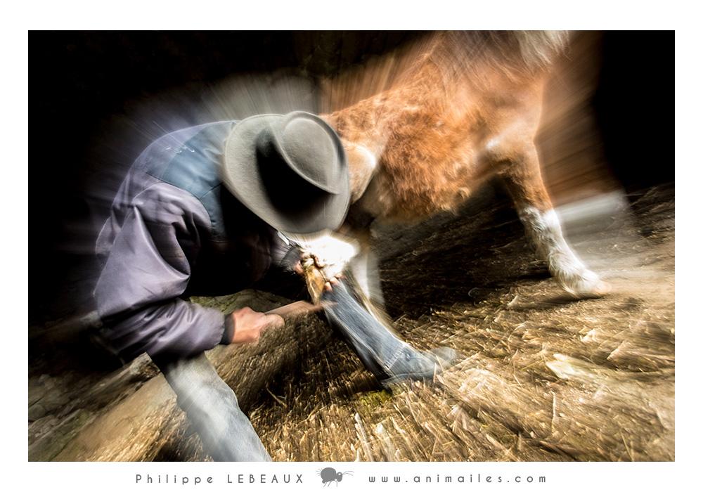 Effet artistique sur Laurent et le poney