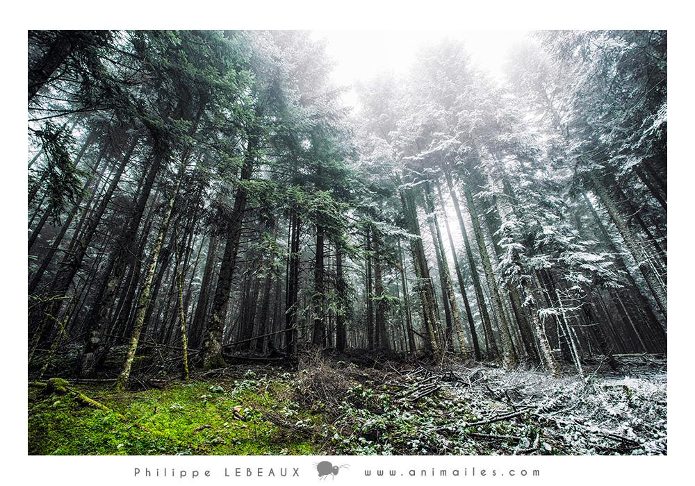 Forêt03