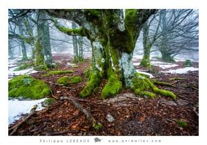 Forêt06