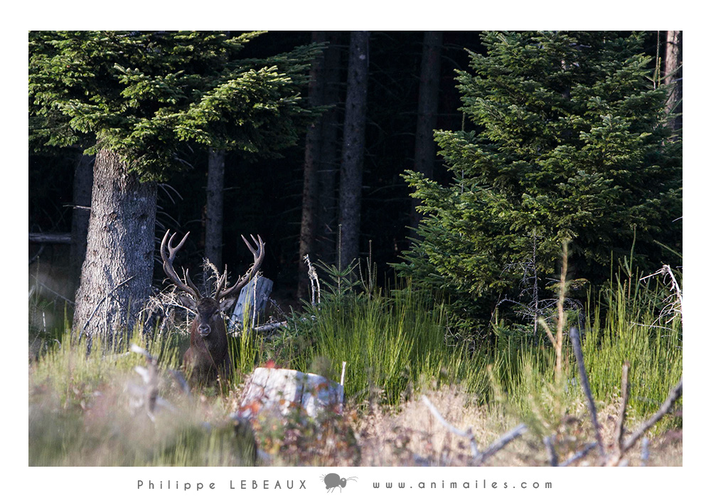 Forêt12