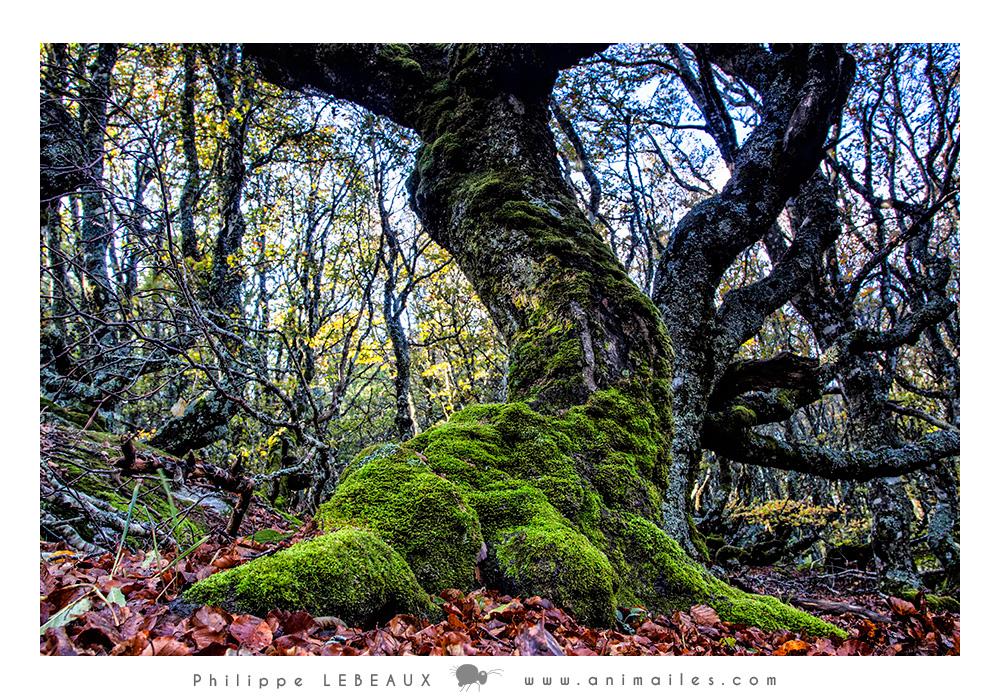 Forêt15