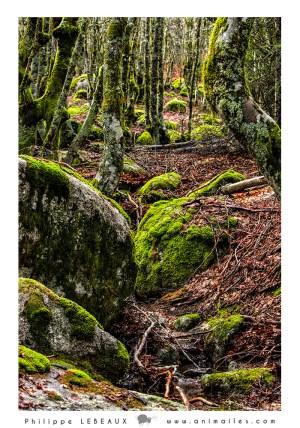 Forêt22