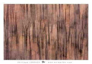 Forêt23