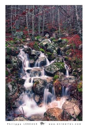 Forêt25
