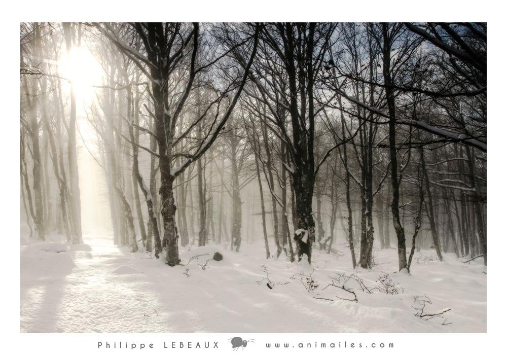 Forêt26