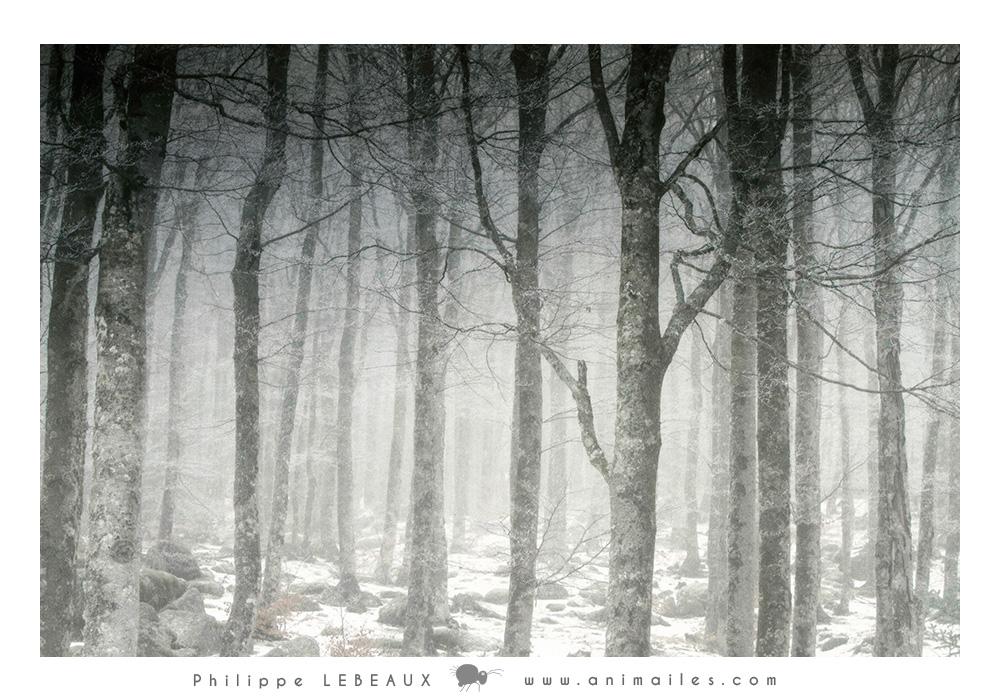 Forêt28