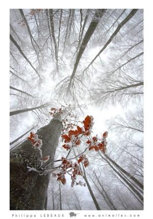 Forêt31