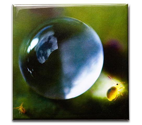 magnet photo collembole
