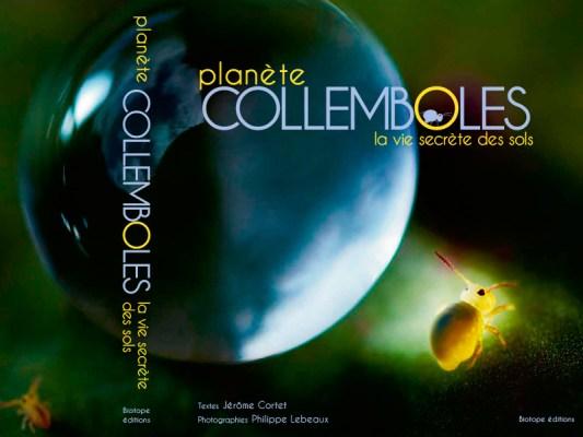 Planète Collemboles, la vie secrète