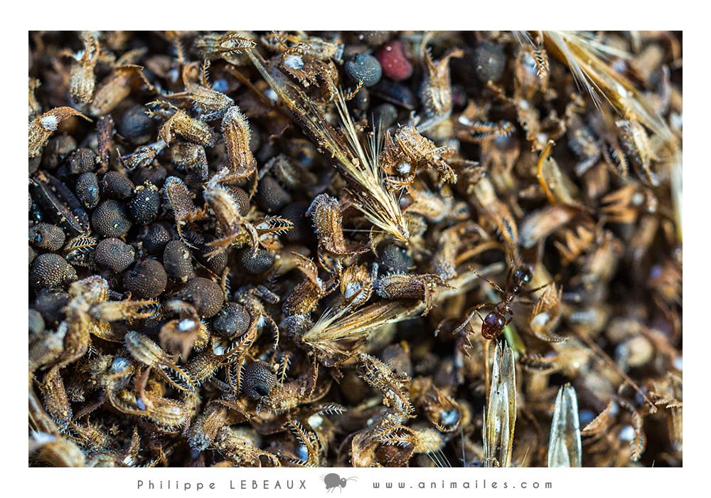 Grenier à graines