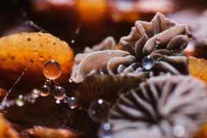 Plan rapproché sur des champignons qui ont poussés sur du bois mort