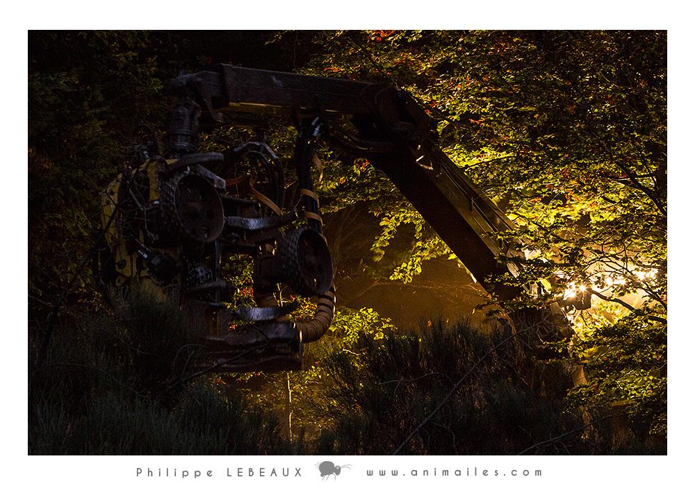 Débroussailleuse en forêt