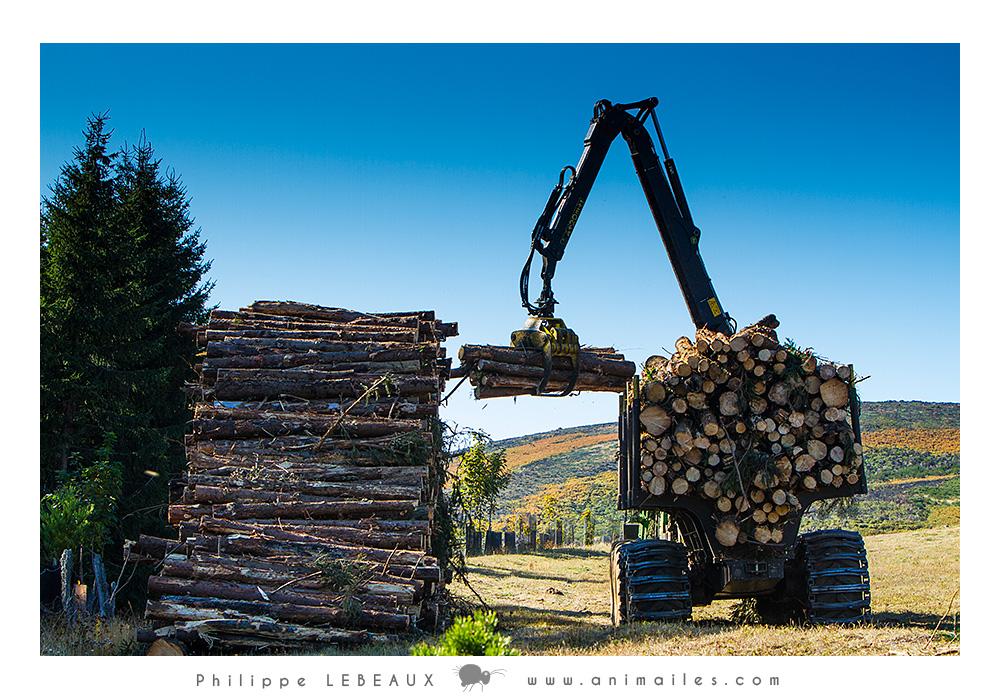 Camion chargeant du bois avec une grue
