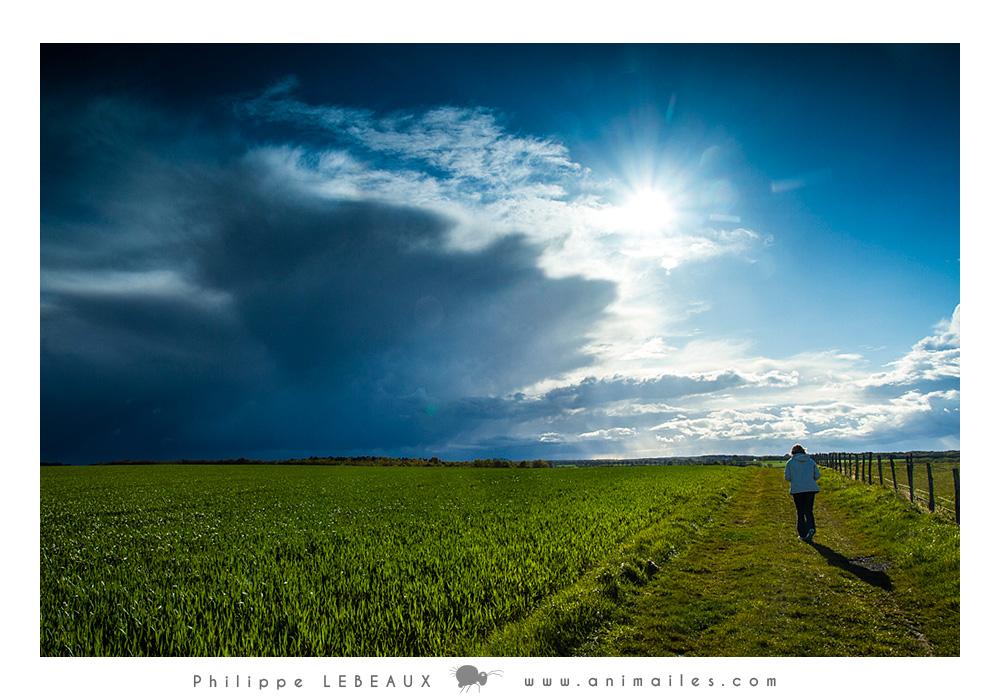 Personnage marchant le long d'un champs cultivé