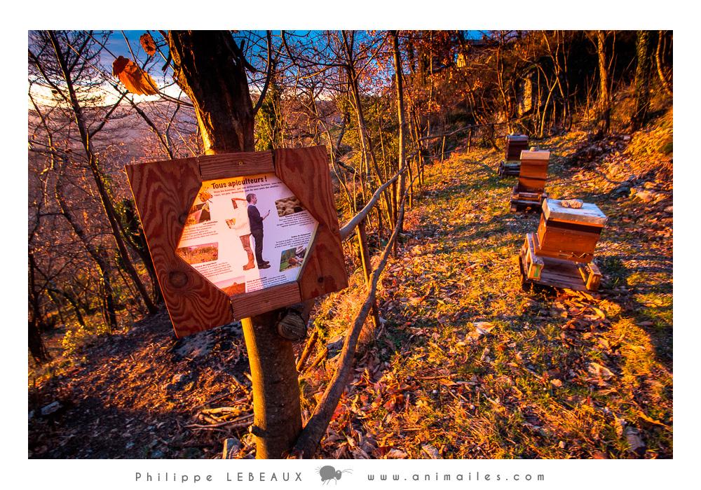 Sentier des abeilles Eco-Ferme Graine de fourmis