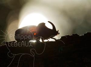BIG FIVE des Cévennes, cinq plus gros coléoptères observés dans le Parc national des Cévennes