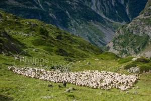 Troupeau de moutons et bergère en montagne