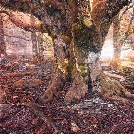 Tirage photo papier fineart HAHNEMUHLE Rag Bright White 310g