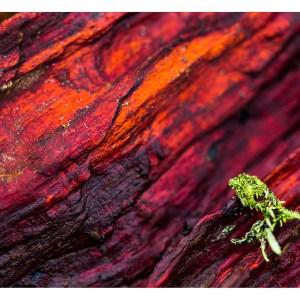 Tirage photo Fine Art Poulpe lichen 50x70cm