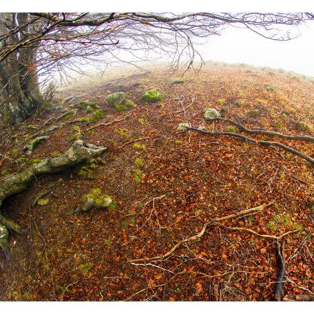 Forêt fisheye 50x60cm