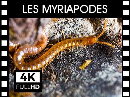 Vidéos Myriapodes