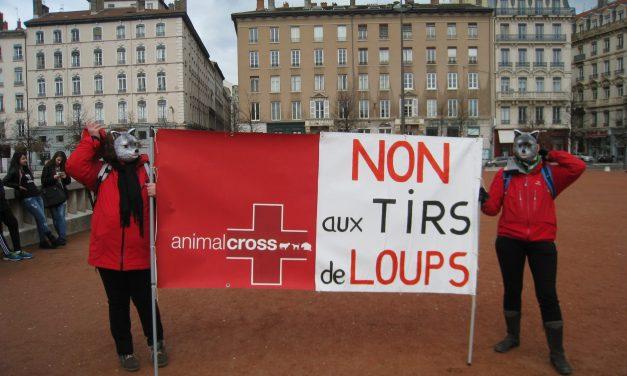 Manifestation de Lyon pour protéger le loup : un franc succès !