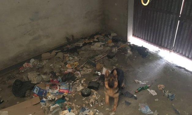 Norka, chienne berger allemand de 8 mois sortie de l'enfer d'un garage poubelle