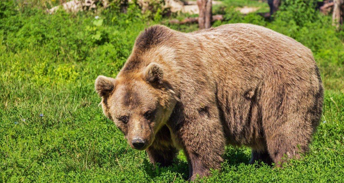 Pourquoi les associations de Cap ours boycottent la réunion du 3 mai?