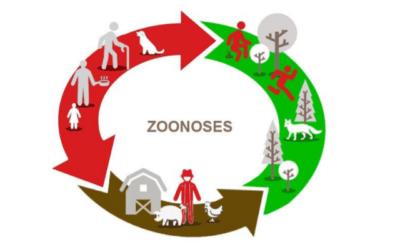 Zoonoses : Et si c'était l'homme qui transmettait ses maladies aux animaux ?