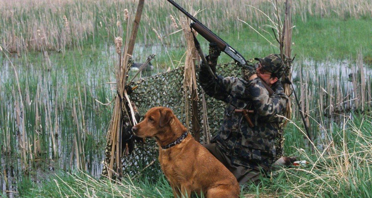 Consultation publique concernant la chasse en Dordogne : répondez avant le 6 mai