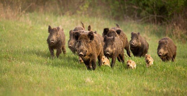 Avec la chasse, c'est toute la nature qui agonise !