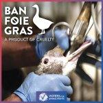 New-York : Comment l'interdiction du foie gras a-t-elle été obtenue dans la capitale gastronomique du pays ?