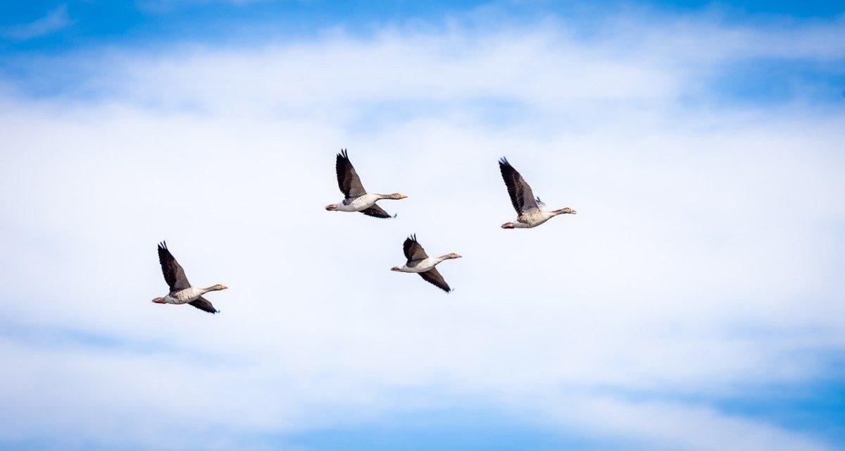 Consultation publique : non au piège de la gestion adaptative des espèces !