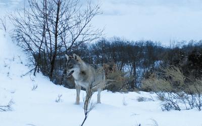"""Sortie du film """"Marche avec les loups"""" de J. M Bertand"""