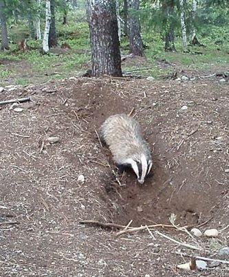 Dites non à la chasse en été