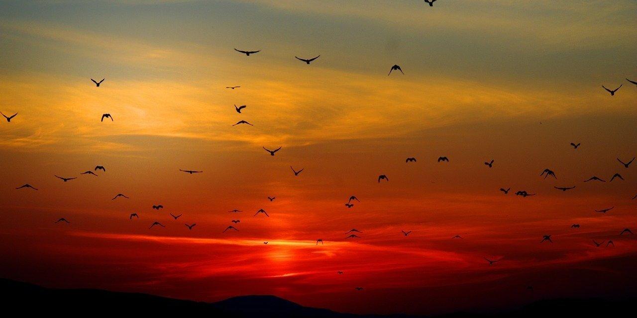 Plus de la moitié des oiseaux sauvages en mauvais état de conservation dans l'UE
