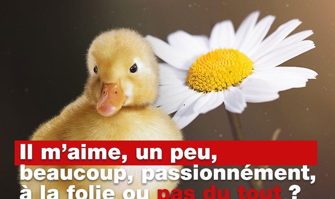 Foie gras : un peu, beaucoup, passionnément ou… pas du tout ?
