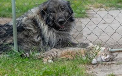 Maltraitance des animaux domestiques : une nouvelle loi votée à l'Assemblée !