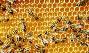 exploitation-of-bees-article