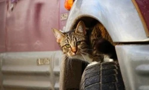 The harm done by cats outdoors: a new report
