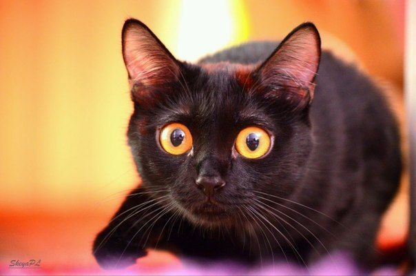 Image result for cat with bug eyes