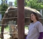 ハーモニカを吹く象