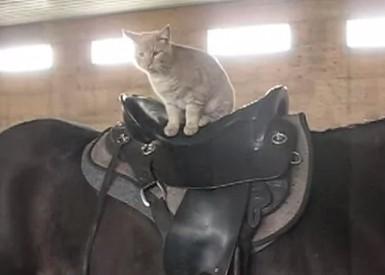 ポニー乗馬ニャンコ